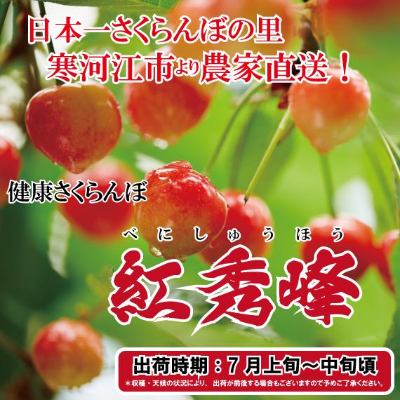 <47CLUB> 商品一覧            紅秀峰の里寒河江市より 農家直送!紅秀峰画像