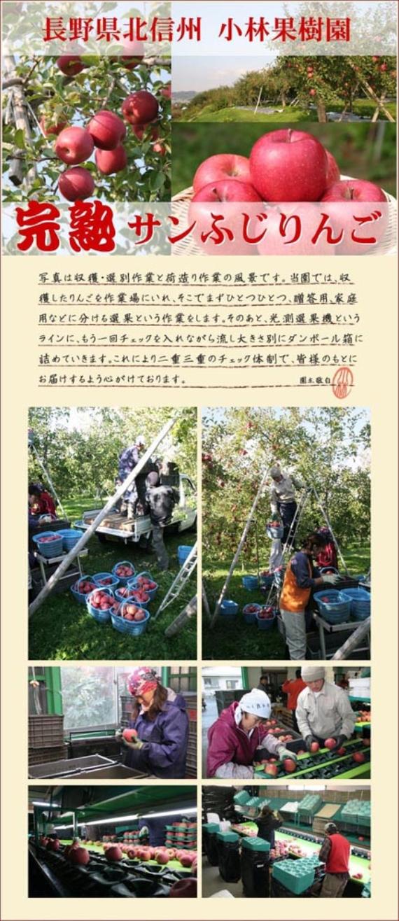 <47CLUB> 完熟サンふじりんご【家庭用10kg】L・M込画像