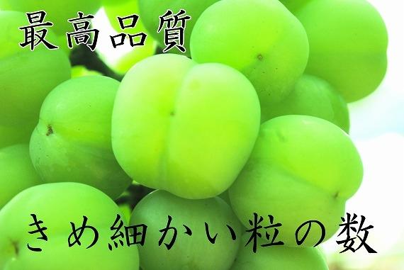 【お中元・送料無料、ギフト】...