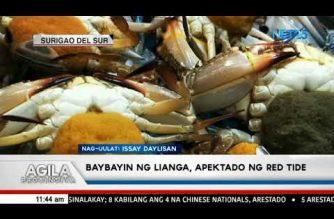 Baybayin ng Lianga, Surigao del Sur apektado ng red tide