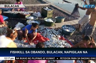 Bulacan loses P17.5-M worth of milk fish, tilapia and other fishes due to fish kill