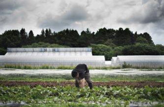 This picture taken on May 24, 2018 shows Yuya Shibakai working at his organic vegetable farm in Inzai, Chiba prefecture. Yuya Shibakai sometimes feels he is ploughing a lonely furrow. The Japanese farmer produces organic lettuce, tomatoes, carrots and other vegetables for a market that has tasted nothing like the success the sector has enjoyed in other advanced economies. / AFP PHOTO / Martin BUREAU / To go with AFP story Japan food organic agriculture, Focus by Anne Beade