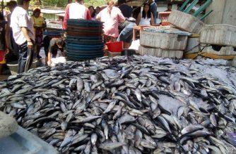 Presyo ng bangus sa Anda, Pangasinan bumagsak sa P15 kada kilo