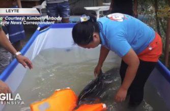 Baby dolphin, napadpad sa baybayin ng Ormoc City