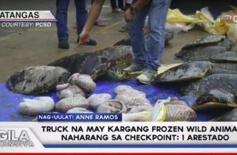 Truck na may kargang frozen wild animals, naharang sa checkpoint