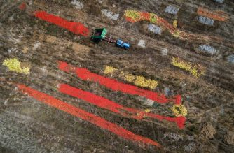 A tractor dumps his trailer of tomatoes on August 6, 2018 near Perly-Certoux, western Switzerland, as a heatwave sweeps across Europe. Too soft or too ripe, the tomatoes are thrown because of the heat that generated a sudden overproduction in the middle of summer while local consumption is slowed down due to holidays. / AFP PHOTO / Fabrice COFFRINI