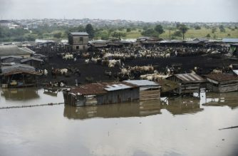 A picture shows a flooded cattle market in Kara-Isheri, in the Ogun State in southwest Nigeria, on September 20, 2018. Heavy seasonal rains have caused the Niger and Benue rivers to burst their banks, inundating communities, farms and trapping tens of thousands of people in their homes. / AFP PHOTO / PIUS UTOMI EKPEI