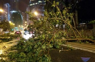"In photos: Fallen trees on Hong Kong roads as Typhoon ""Mangkhut"" continues to batter Asia"