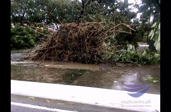 Watch:  Trees uprooted after typhoon Ompong's onslaught in Pangasinan