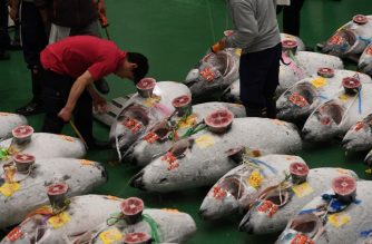 Buyers, workers and auctioneers attend the first tuna auction at the new Toyosu fish market, the first day of the market's opening in Tokyo on October 11, 2018. (Photo by Toshifumi KITAMURA / AFP)