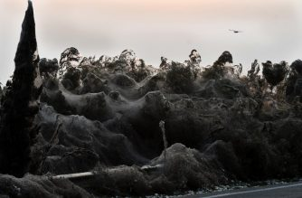 A photo shows a unique 1,000 m long spider-web covering the road beside the Vistonida lake, near Xanthi, northern Greece, on October 18, 2018. - Warmer weather conditions in Greece and an increase in the mosquito population are thought to have contributed to the rise in the number of spiders. The spiders are from the genus Tetragnatha, known as stretch spiders due to their elongated bodies. They are known to build webs near watery habitats, with some species even said to be able to walk on water. (Photo by Sakis MITROLIDIS / AFP)