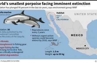 Scientists spot six near-extinct vaquita porpoises