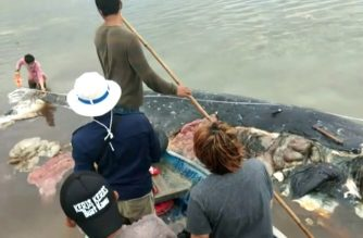Dead sperm whale in Indonesia found with 6 kg of plastic in stomach