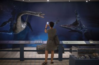 "A woman takes a picture in the expo ""When Not Everything Was Ice: New Discoveries in the Antarctic Continent"", based on discoveries and the museum's collection during the Paleoantar Project, part of the Brazilian Antarctic Program, in Rio de Janeiro, Brazil on January 16, 2019. - ""When Not Everything Was Ice: New Discoveries in the Antarctic Continent"" is the first exhibition at the National Museum after the fire that engulfed the building in September 2018. (Photo by Mauro Pimentel / AFP)"