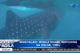 #Pasyalan: Whale shark watching sa Oslob, Cebu