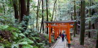 Kyoto gezi rehberi
