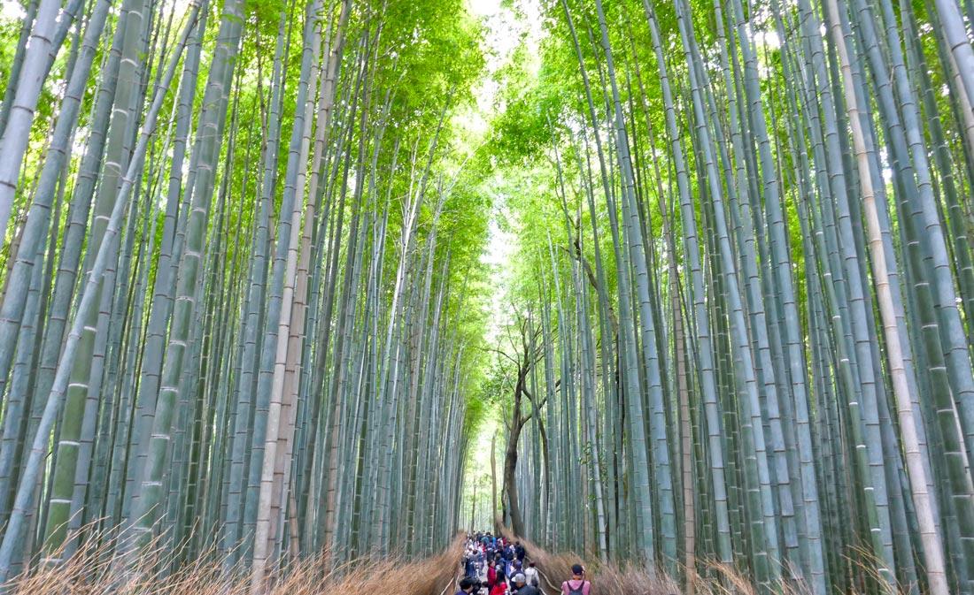 kyoto-bambu-ormanı