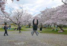 sakura-jump-kyoto