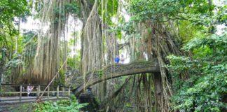 Haftalik-bülten-4-maymun-ormanı