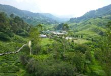 Cameron-Highlands-3