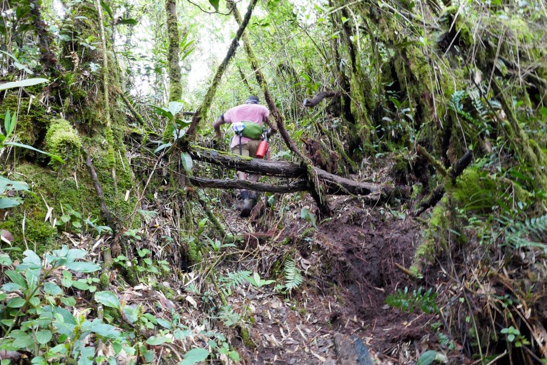 mossy forest yürüyüşü