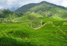 Cameron highlands manzara
