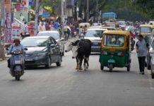 hindistan-bangalor