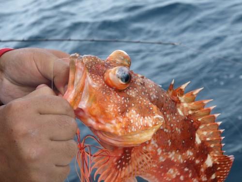 bottom_fish