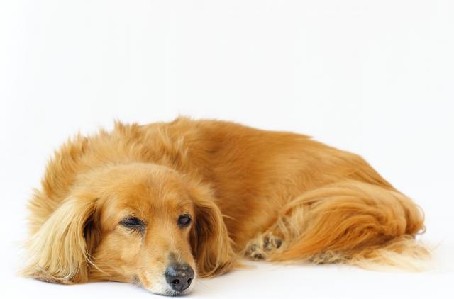 犬 ため息 意味