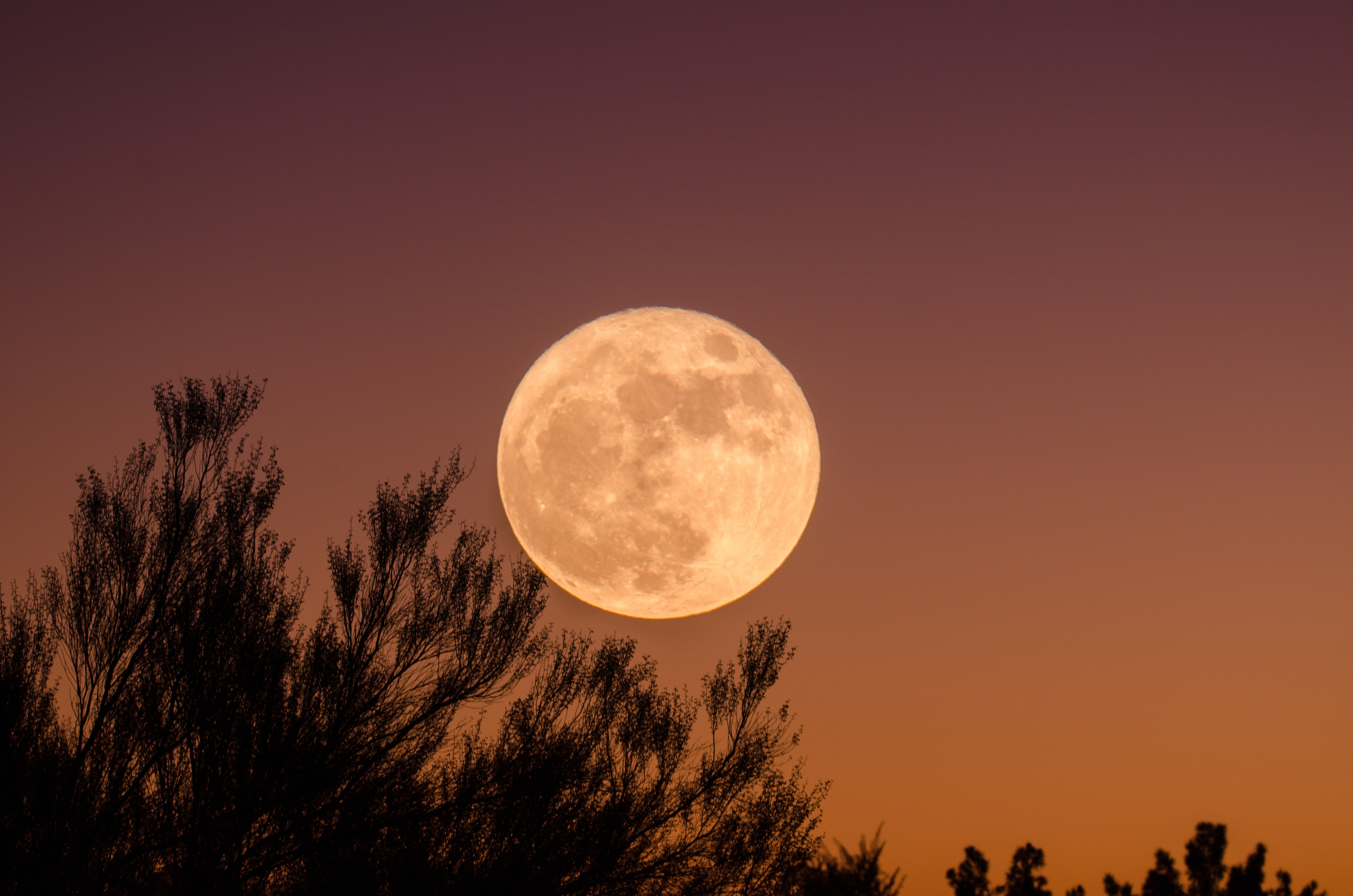 月が綺麗ですね 返し