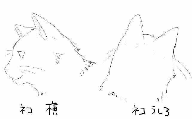 猫イラストの描き方の特徴は耳にある