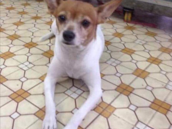 ベトナムの犬の名前事情