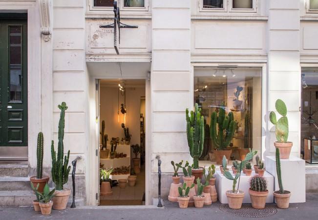 large_kaktus-cactus-copenhagen-store
