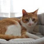 快適な睡眠を!手作りもできちゃう!猫におすすめのベッド