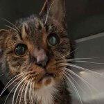 街をさまよっていた15歳のボロボロの猫がついにたどり着いた家