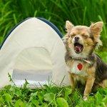 犬をつながずに泊まれる!関東&中部のドッグフリーサイトがあるキャンプ場8選
