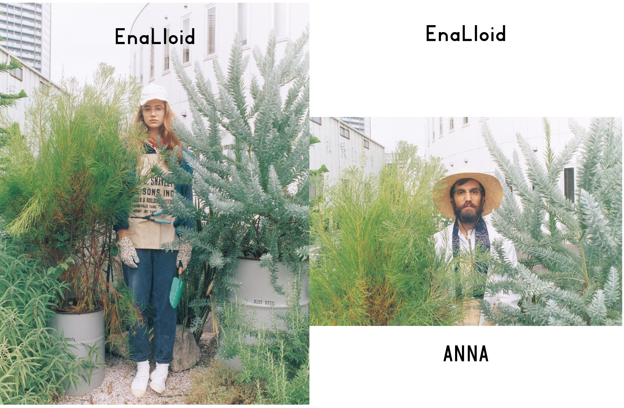 Enaloid