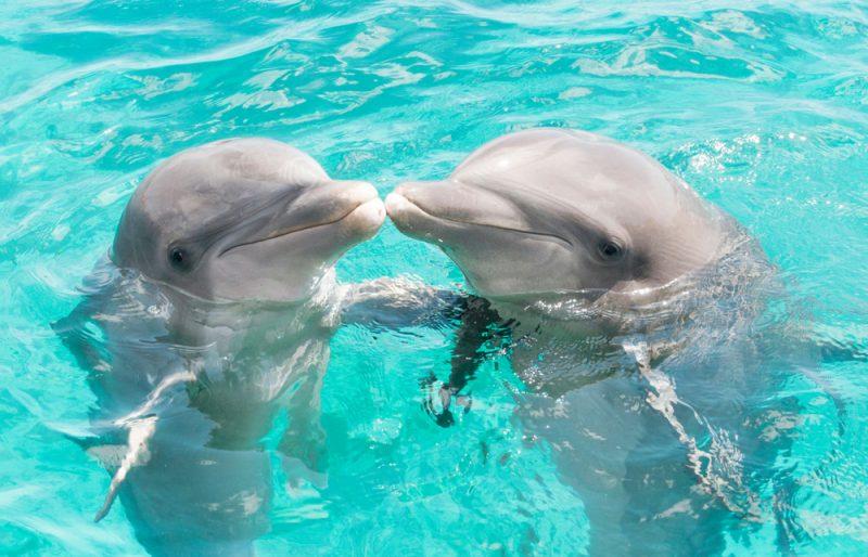 タヒチ 新婚旅行 モーレア島