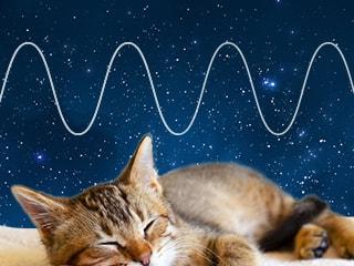 [睡眠學 #2]潛在患者數は300萬人? 21世紀の現代病、睡眠時無呼吸癥候群を解説