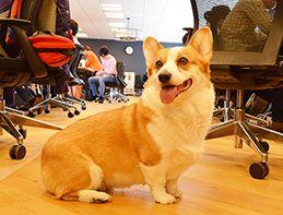 ガイドはワンちゃん!オフィスに役員犬「ジョブさん」のいる風景。[オフィスへGo エウレカ編]