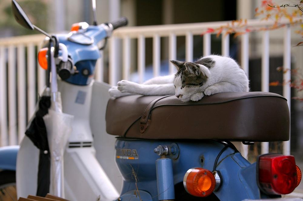 ホンダカブと猫