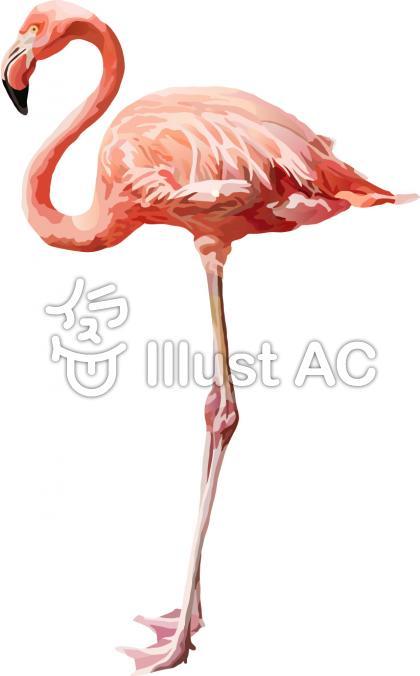 フラミンゴの画像 p1_29