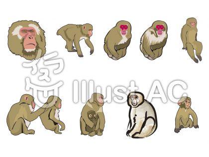 猿の画像 p1_30