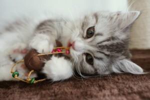 猫に魚は間違い!?専門医が教える猫に絶対してはいけないことワースト3