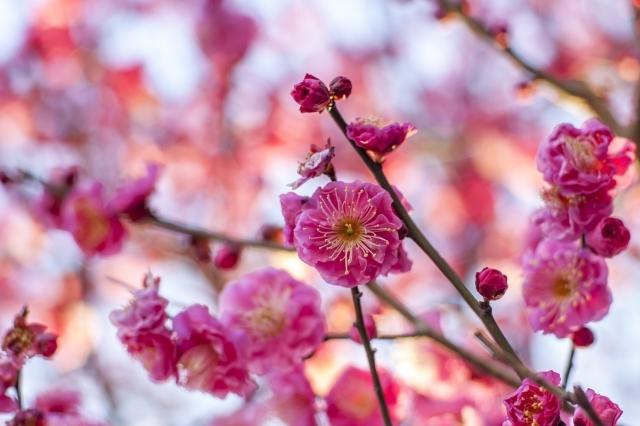 今日は何の日 2月4日は「立春」