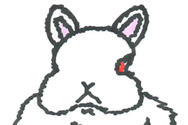 プロが教える!明日からウサギと暮らすため講座 「うさぎの眼、はな、くち、耳ってどうなってるの?」