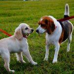愛犬と一緒に水族館へ!京急油壺マリンパークで「愛犬フェスタ」が4月1日に開催!