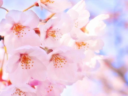 【期間限定】春の格安プラン〜無料朝食付き♪