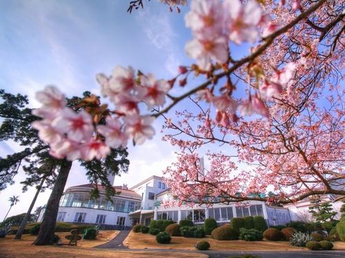 <常春の川奈>桜を眺めながらティータイム♪(朝食付き)