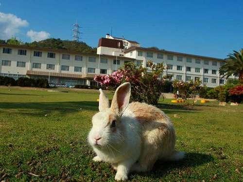 休暇村 大久野島◆近畿日本ツーリスト